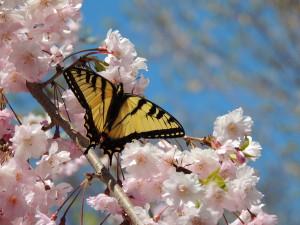 Butterfly 4 30 13 014